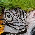 Wild Eyes - Parrot by Carol Cavalaris