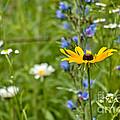 Wild Flower Delight by Cheryl Baxter