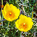 Wild Flowers 2 by Jeelan Clark