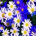Wild Flowers 3 by Jeelan Clark