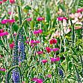 Wild Flowers by Deb Buchanan
