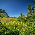 Wild Flowers Glacier National Paintedpark   by Rich Franco
