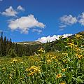 Wild Flowers In Rocky Mountain National Park by Heather Coen