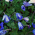 Wild Flowers by Ti Oakva