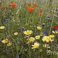 Wild Flowers Russian Ridge by Jason O Watson
