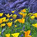 Wild Flowers by Stephen Dilley