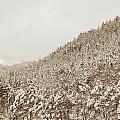 Wild Forest Retro by Guido Montanes Castillo