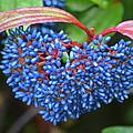 Wild Fruits2 by Riad Belhimer