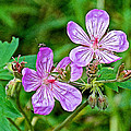 Wild Geranium On Trail To Swan Lake In Grand Teton National Park-wyoming by Ruth Hager