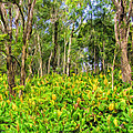 Wild Ginger And Ohia Trees by Dominic Piperata