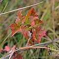 Wild Gooseberry Leaves by Ann E Robson