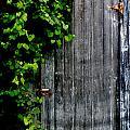 Wild Grape Vine Door by Michael Arend