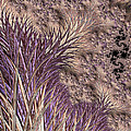 Wild Grasses Blowing In The Breeze  by Heidi Smith