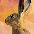 Wild Hare by Tanya Hall