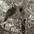 Wild Hawaiian Parrot Sepia by Joseph Baril