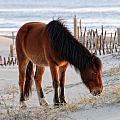 Wild Horse At Sunrise by Liz Mackney