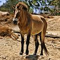 Wild Horse by Blake Richards
