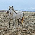 Wild Horse by David Armstrong