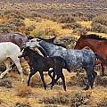 Wild Horse Family by Darlene Grubbs