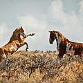 Wild Horse Fight by Steve McKinzie