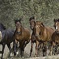 Wild Horse Herd by Meg Frederick