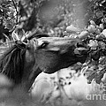 Wild Horse In Dunes by Patricia Ramaer