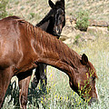 Wild Horse Mama And Her Baby by Sabrina L Ryan