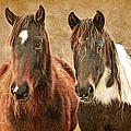 Wild Horse Pair by Steve McKinzie
