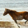 Wild Horse Running Through Water by Dan Sproul