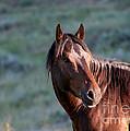 Wild Horse by Sabrina L Ryan