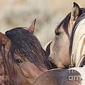 Wild Horse Secrets by Carol Walker