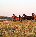 Wild Horses At Sunset by Sabrina L Ryan