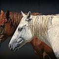 Wild Horses by Daniel Hagerman