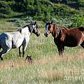 Wild Horses In Medora by Sabrina L Ryan