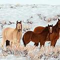 Wild Horses by Mary Benke