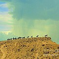 Wild Horses Monument by Janette Boyd