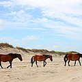 Wild Horses Of Corolla - Outer Banks Obx by Design Turnpike