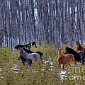 Wild Horses Of The Ghost Forest by James Anderson