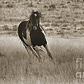 Wild Horses-sepia-signed-#7288 by J L Woody Wooden