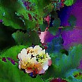 Wild Jasmine by Colleen Taylor