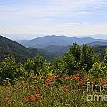 Wild Lilies With A Mountain View by Jill Lang