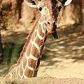Wild Look by Tinjoe Mbugus