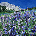 Wild Lupine by Barbara Jewell