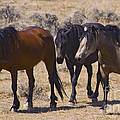 Wild Mares-signed-#0271 by J L Woody Wooden