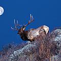 Wild Moon by Shane Bechler