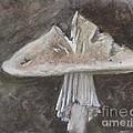Wild Mushroom 2 by Elizabeth Ellis