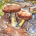 Wild Mushrooms by Carol Wisniewski