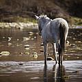 Wild Mustang On The River  by Saija  Lehtonen