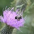 Wild Nectar by Bonfire Photography
