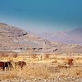 Wild Nevada Mustang Herd by Bobbee Rickard